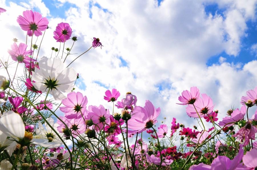 imagenes-de-paisajes-de-primavera-para-facebook-1